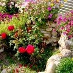 Розы на корке