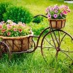 Горшки с цветами на велосипеде