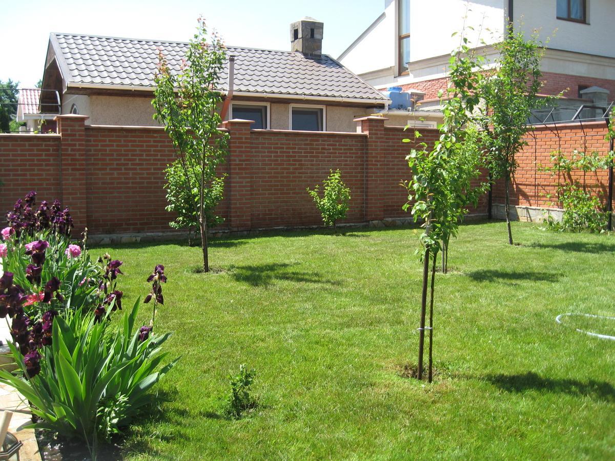 Какие деревья посадить возле дома фото