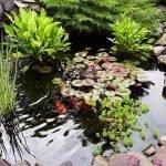 Прудик с водными растениями