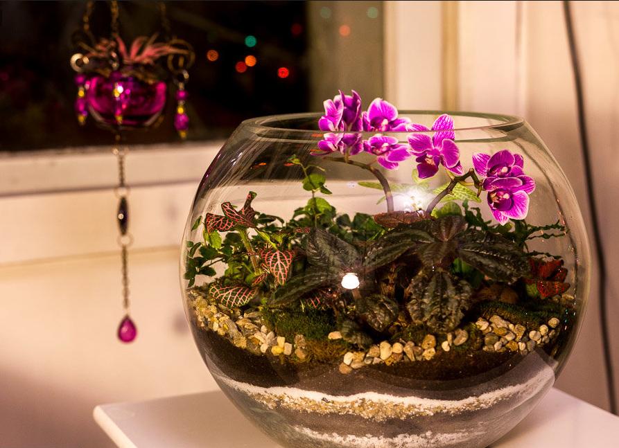 Орхидеи в колбе