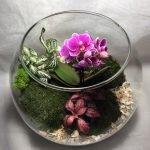 Цветущий флорариум