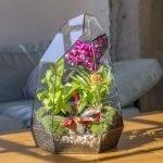 Многогранник с орхидеями