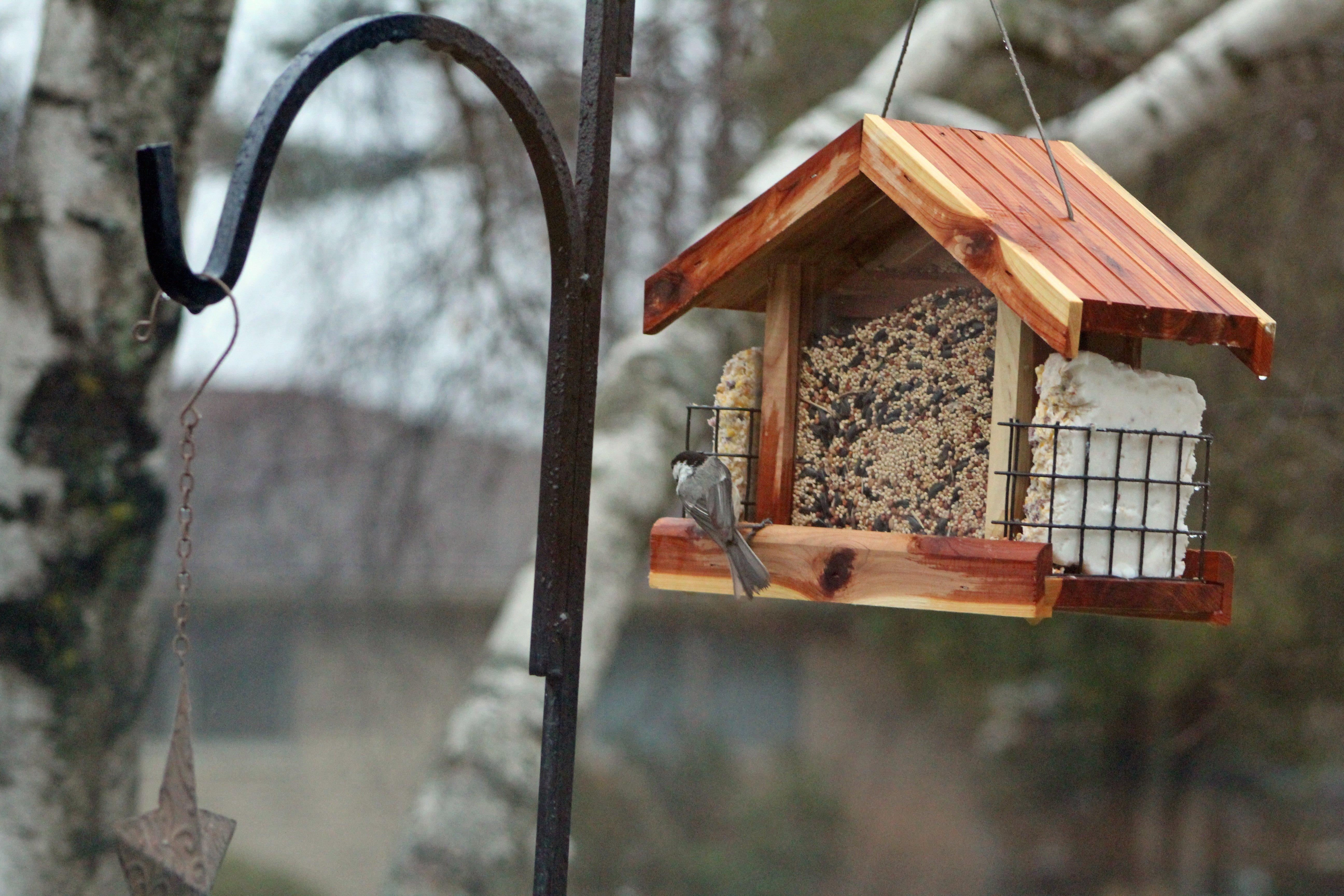 картинки птичьих кормушек состав систематического древа
