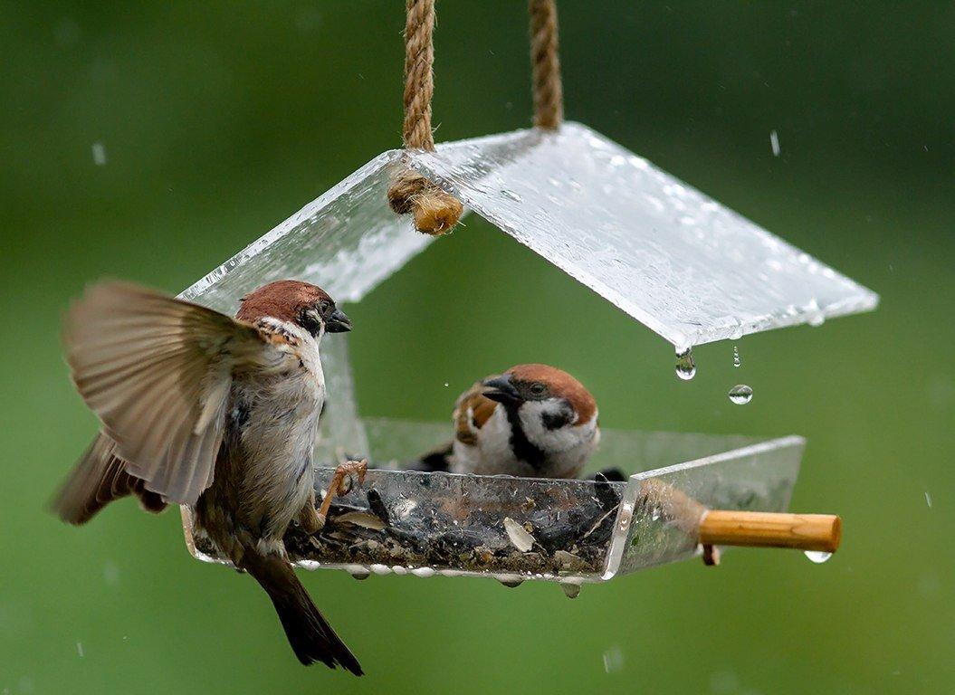 Кормушка для птиц — узнайте лучшие мастер-классы и пошаговые уроки по изготовлению кормушки для птиц своими руками! (фото и видео)