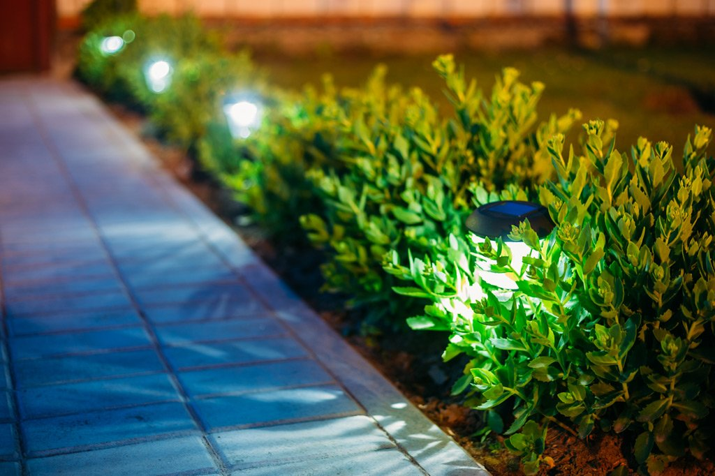 Подсветка кустарника