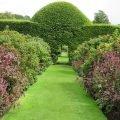 Декор сада кустарниками