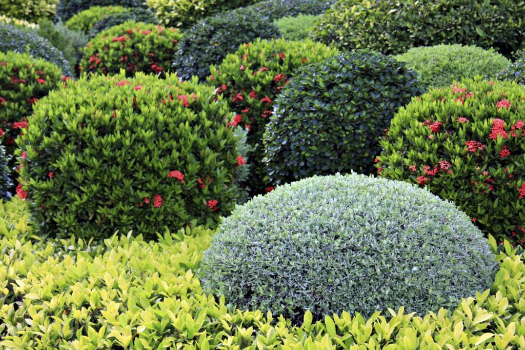 Красивые декоративные кустарники для сада - «Ландшафтный дизайн»