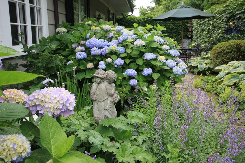 Садовая гортензия в ландшафтном дизайне