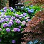 Японский стиль оформления сада