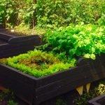 Выращивание зелени на грядках