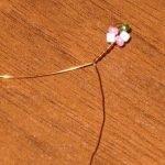 Делаем цветочки