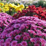 Изобилие цветов