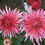 Резные цветы