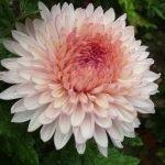 Большой цветок