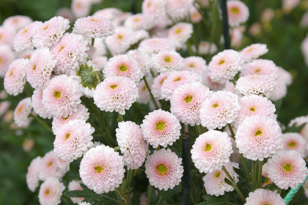 Мелкие цветы