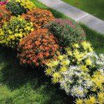 Соседство цветов