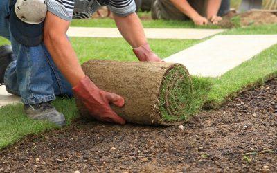 Как посадить газон: правильная инструкция