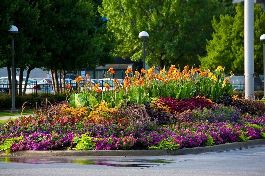 Цветы для многолетней клумбы
