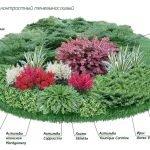 Схема клумбы теневых растений