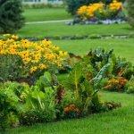 Клумба из огородных растений