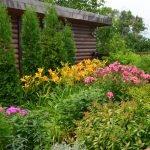 Вечнозеленые растения для сада