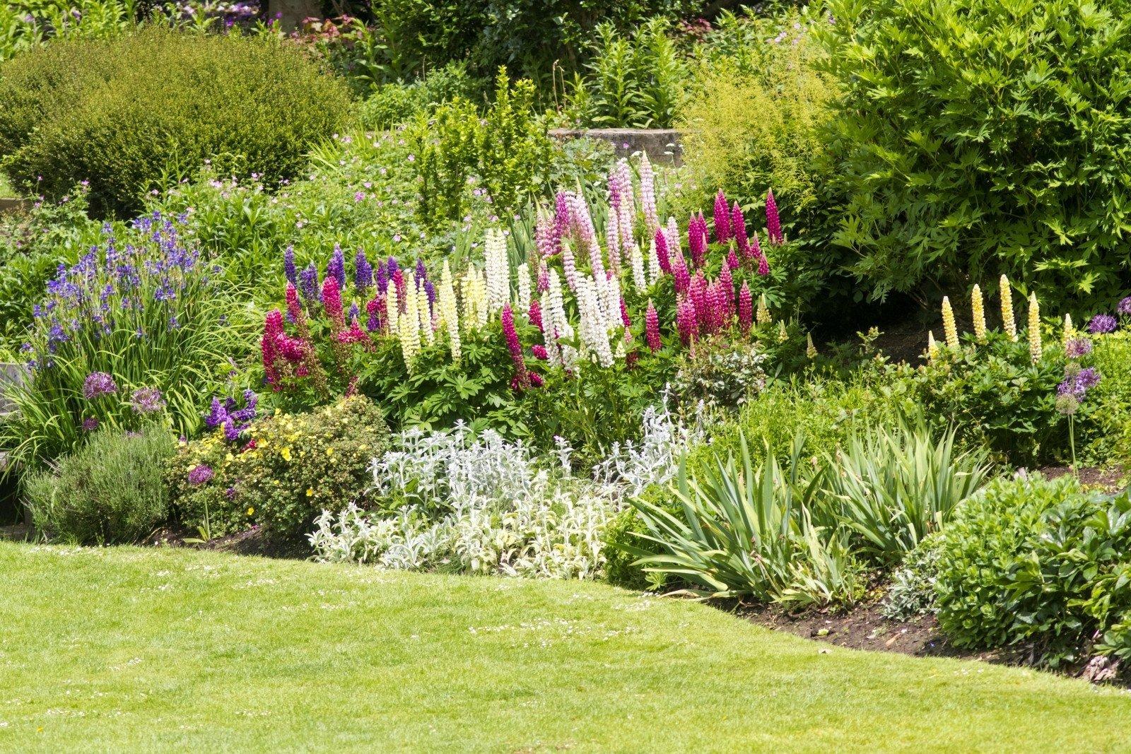 Теневыносливые растения для сада