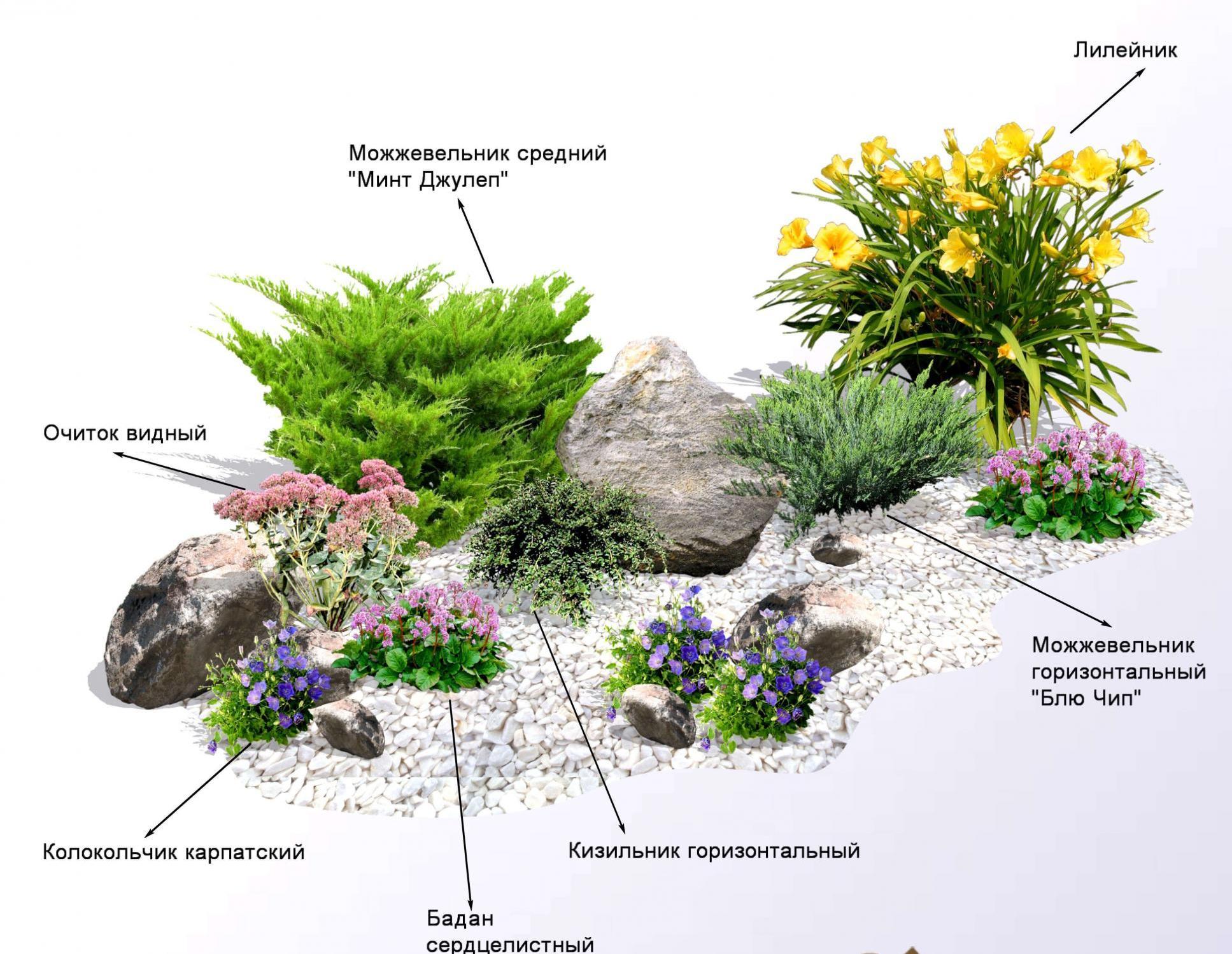 Клумба из растений схема