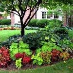 Теневые растения в ландшафтном дизайне
