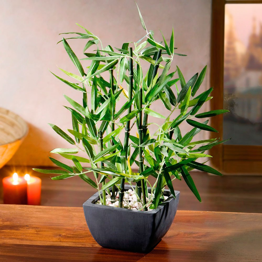 Горшок с комнатным бамбуком