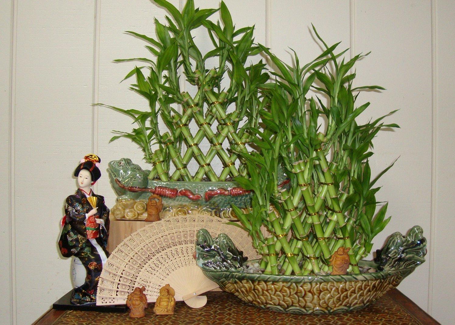 Емкости из фарфора с комнатным бамбуком