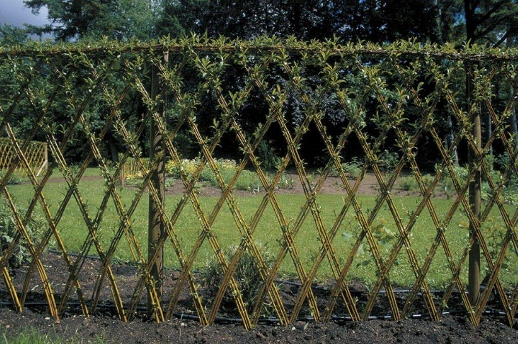 забор из ивы своими руками фото начало новой
