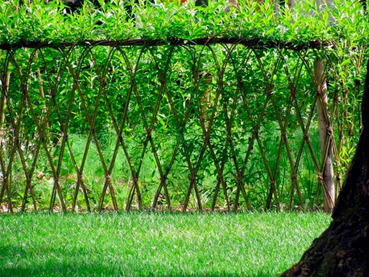 живой забор на даче своими руками фото осмотры