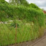 Живой забор вокруг газона