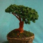Деревце готово