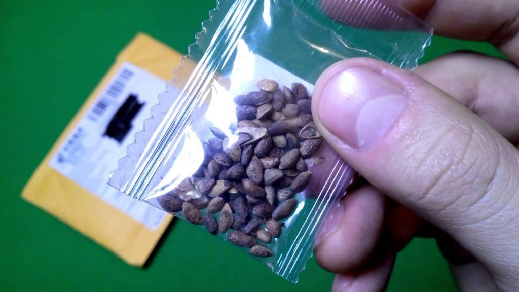 Семена бонсай