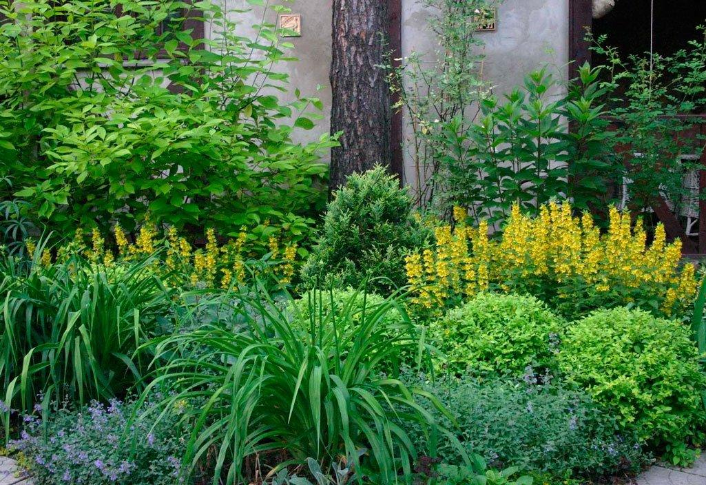 Тенелюбивые садовые растения