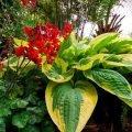 Многолетние теневыносливые цветы для сада цветущие все лето