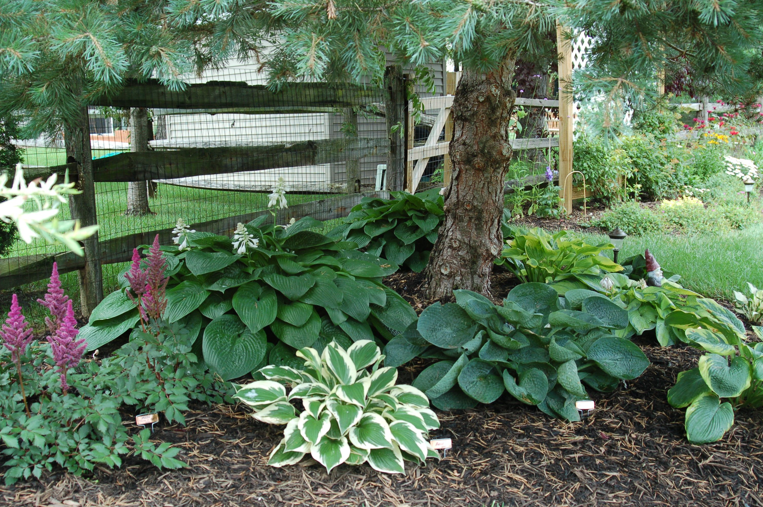 Уход за тенелюбивыми садовыми растениями