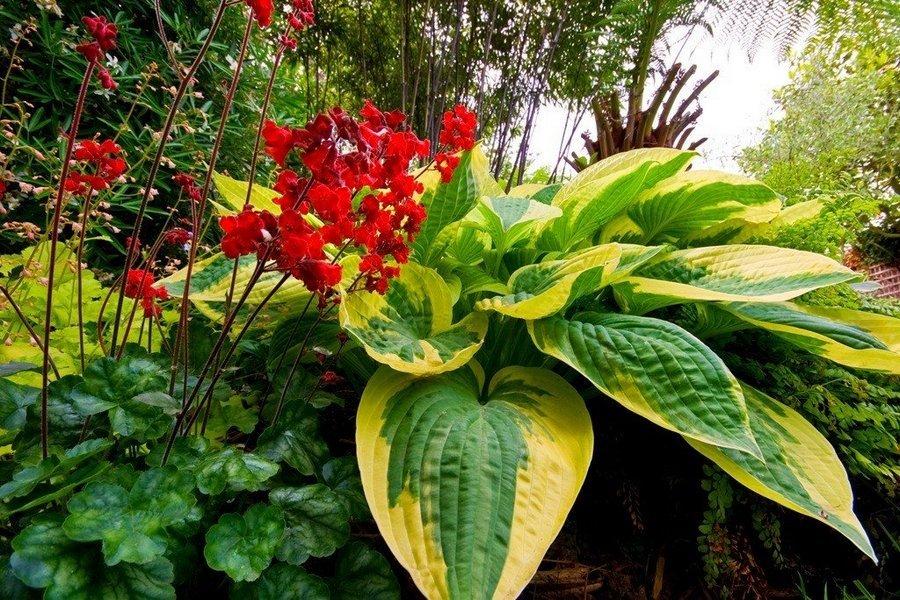 Теневыносливые цветы для сада, летние цветы, которые любят тень, многолетние и однолетние цветы, растущие в тени и полутени: список, описание