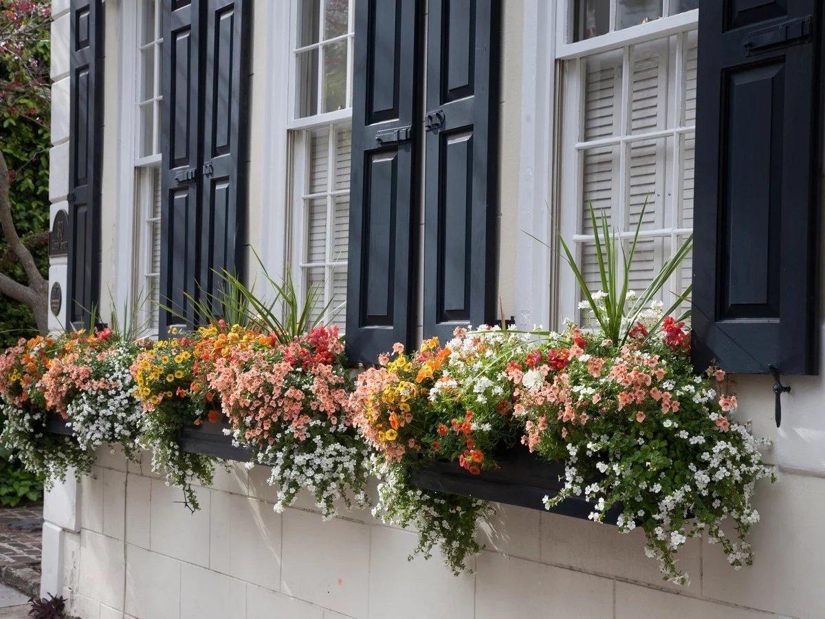 Оформление цветами окна городских квартир фото