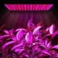 Растения под лампой