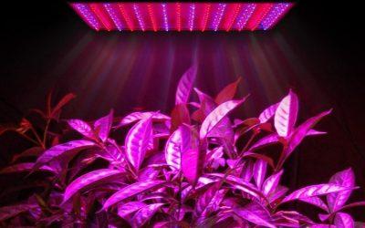 Как выбрать светодиодную лампу для растений
