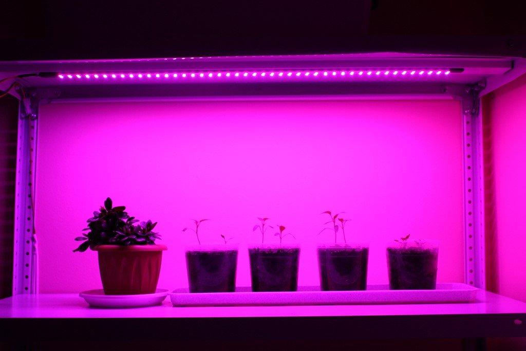 Растения и свет