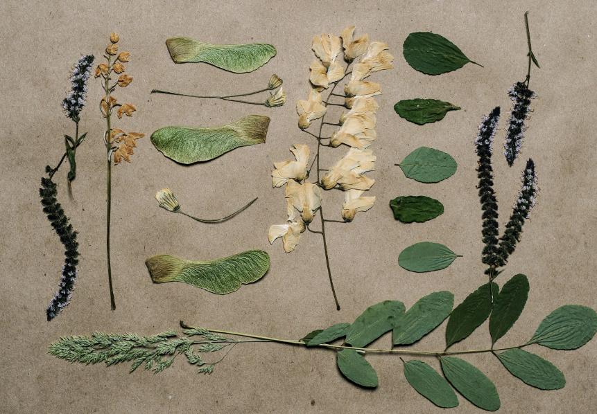 Растения для гербария