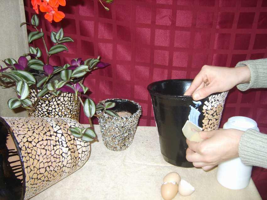 Кашпо из яичной скорлупы