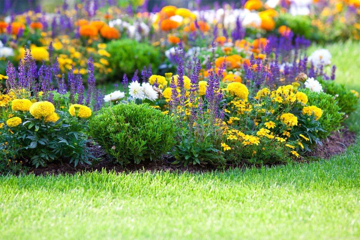 подробнее, цветочный газон в картинках области уводить