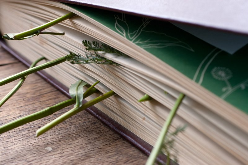 Сушка растений под прессом