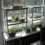 Полки для рассады на окне
