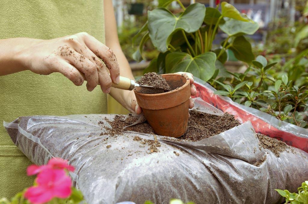 Выбор почвы